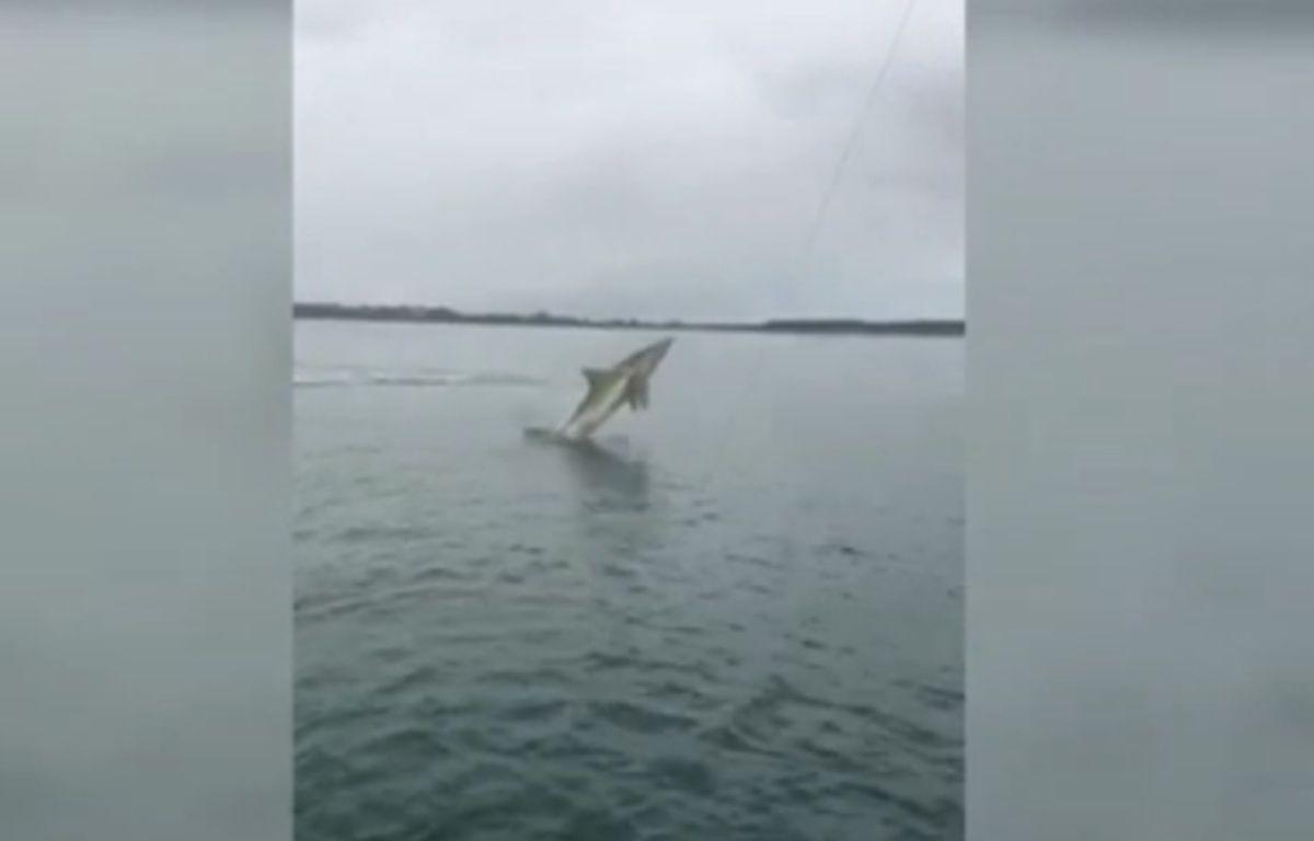 Elliot Gordon et son ami espéraient pêcher du vivaneau, ils ont attrapé... un requin.  – Capture d'écran / Youtube