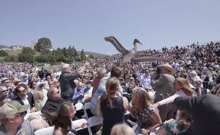 L'un des pélicans a d'abord tenté de se poser au milieu de la foule et a attaqué des spectateurs.