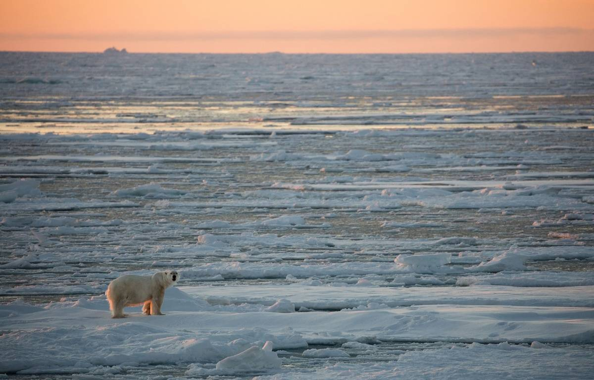Un ours blanc sur de la glace dans l'océan arctique. – SOLENT NEWS/SIPA