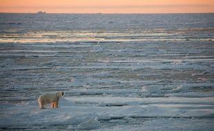 Un ours blanc sur de la glace dans l'océan arctique.