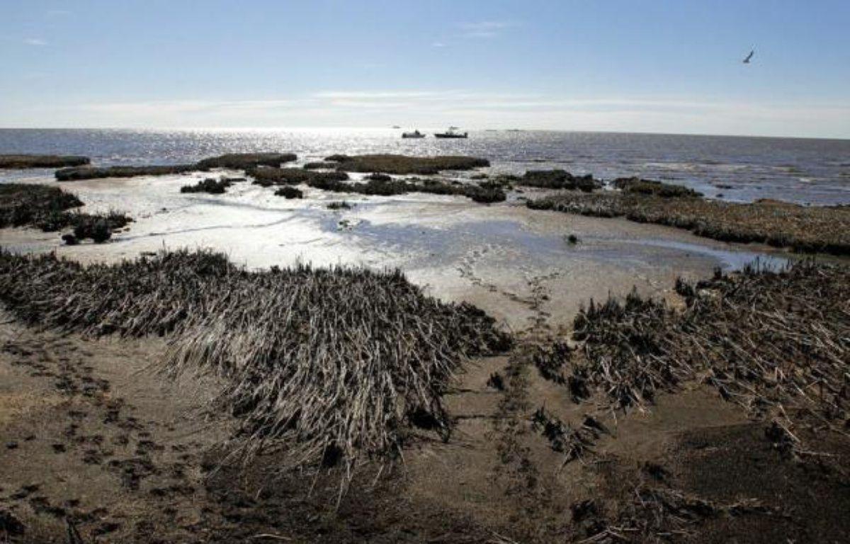Des dauphins morts s'échouent toujours avec une effarante régularité sur le rivage, le corail étouffe sous une couche de pétrole: deux ans après la pire marée noire de l'histoire américaine, le golfe du Mexique est loin d'avoir pansé ses plaies. – Sean Gardner afp.com