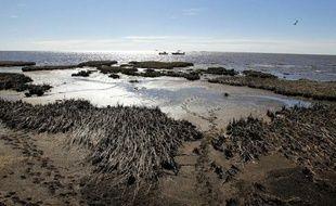 Des dauphins morts s'échouent toujours avec une effarante régularité sur le rivage, le corail étouffe sous une couche de pétrole: deux ans après la pire marée noire de l'histoire américaine, le golfe du Mexique est loin d'avoir pansé ses plaies.