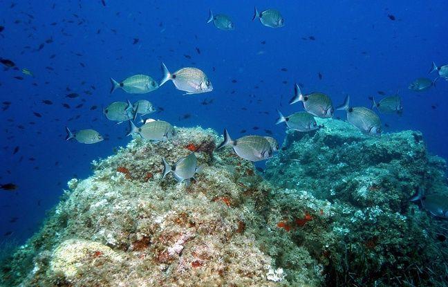 Plongee sous-marine avec