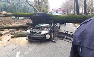 La chute d'un arbre sur la voiture a causé la mort d'un automobiliste