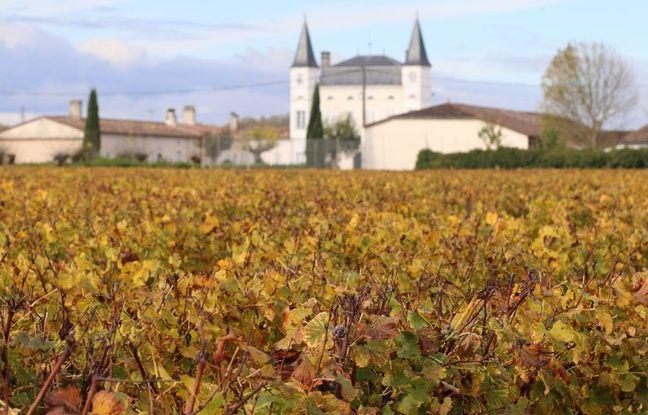 Vignoble dans le Sauternes