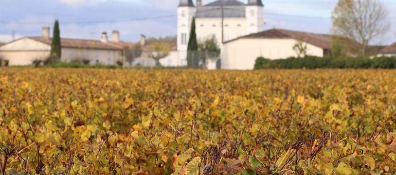 Vignoble dans le Sauternes. Illustration.