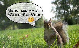 Lorraine: Ils installent des panneaux au bord de la route pour protéger les écureuils des automobilistes.