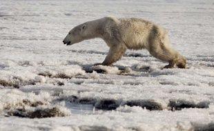 Un ours polaire a été retrouvé à des centaines de kilomètres de son habitat naturel, à Tilichiki en Russie.