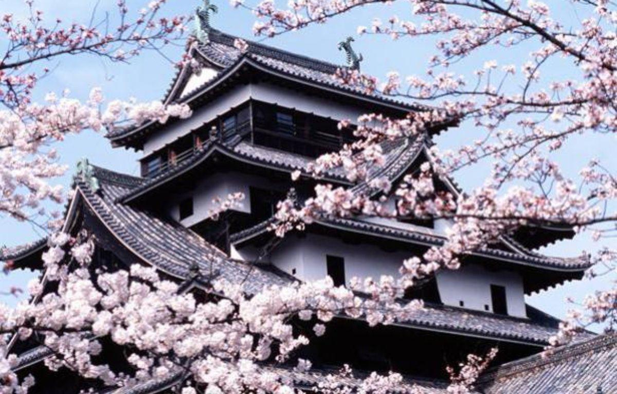 Un cerisier en fleurs devant le château de Matsue au Japon en 2003.  – SIMMONS BEN/SIPA