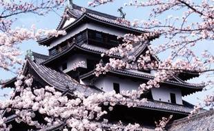 Un cerisier en fleurs devant le château de Matsue au Japon en 2003.