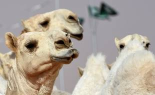 Le festival se déroule sur 3.000 hectares au milieu du désert.