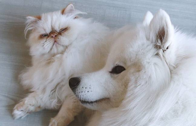 648x415 un chien et un chat illustration