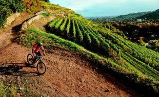 A VTT, en vélo de route ou randonnée ou encore avec une simple bicyclette de ville, des balades en Alsace, il y en a pour tous les goûts.