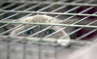 Un chat dans une cage (illustration).