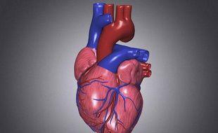 Illustration d'un coeur humain