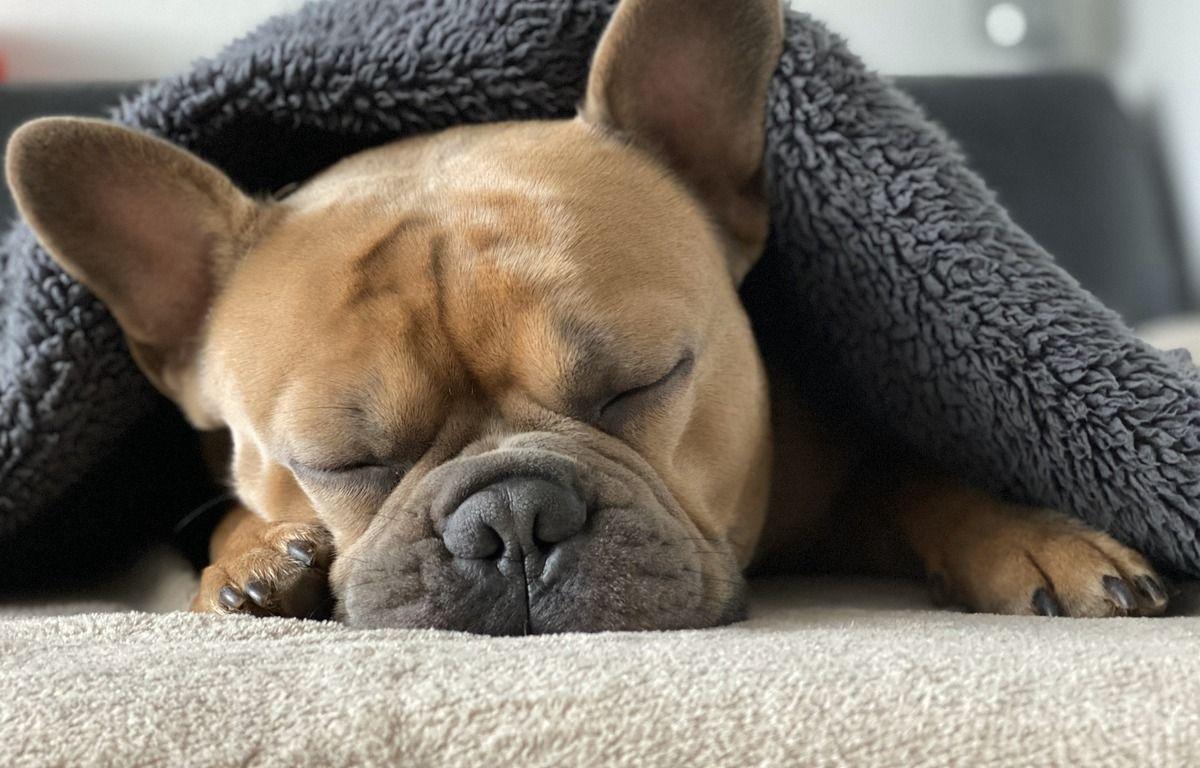 Sommeil : Ne pas assez dormir la nuit augmente les risques de démence selon une étude