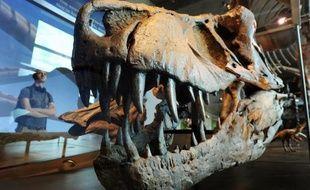 Avec plus de cinq tonnes de pression sur une seule dent, la mâchoire du tyrannosaure était bien à la hauteur de sa réputation de terrible prédateur et aurait aisément fait mordre la poussière à n'importe quel alligator, affirme une étude publiée mercredi.