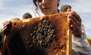 Une apicultrice montre les abeilles mortes qu'elle a trouvées dans sa ruche pour sensibiliser à leur disparition.