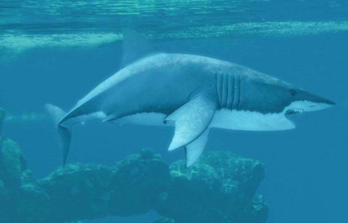 Requins une simple morsure d 39 exploration de requin blanc - Dessiner un requin blanc ...
