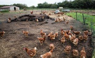 Illustration d'une exploitation de poules.