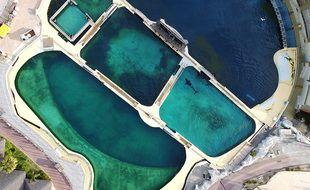 Des algues sont visibles dans les bassins des orques