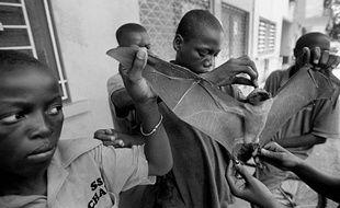 Des enfants portent une chauve-souris à Abidjan, en Côte d'Ivoire, le 8 avril 2001