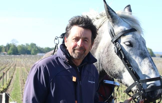 Sébastien Bouetz, dirigeant de l'entreprise Cheval des Vignes à Saint-Emilion
