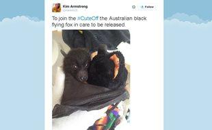 Capture d'écran d'un tweet d'une participante au #cuteoff sur Twitter, le 2 septembre 2015.