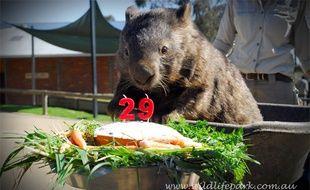 29 ans et encore la forme Patrick le wombat !