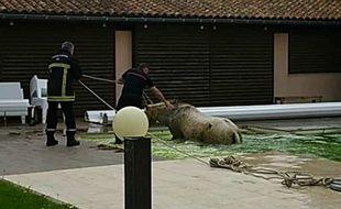 Un cheval, tombé dans la piscine d'un particulier à Cadours, en Haute-Garonne, a dû être secouru, le 16 avril 2018.