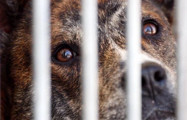 SPA: Six mille animaux à adopter ce week-end lors des portes ouvertes
