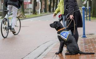 Illustration: un chien guide d'aveugle en France en décembre 2014.