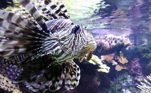 Le parc marin Océanopolis de Brest abrite environ 10.000 animaux marins.