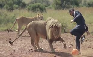 A en juger par la vidéo, les lions sont tout de même assez personels balle au pied.