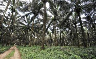 """Greenpeace International et l'institut Oakland ont demandé jeudi dans un communiqué """"une enquête approfondie"""" sur la société américaine Herakles Farms, qui mène au Cameroun un projet controversé de culture de palmiers à huile."""