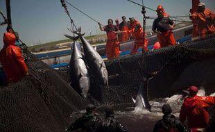 Des pêcheurs de thon en Espagne, en avril 2011.