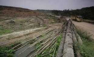 Une plantation de palmiers à huile à Aceh, en Indonésie