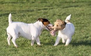 Achetés dans plusieurs pays comme la Slovaquie, les chiens auraient été revendus sur Le Bon Coin. Illustration