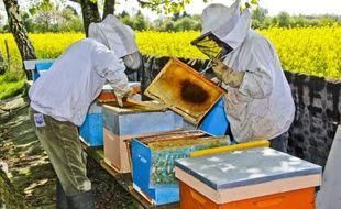 Des ruches et des apiculteurs, en France. (illustration)