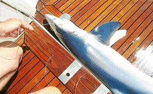 D'autres opérations effectuées sur les requins ont été menées par l'association Ailerons.