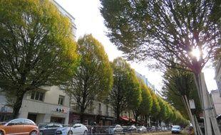 Quatre arbres ont déjà été abattus et 25 autres doivent l'être prochainement le long de l'avenue Janvier à Rennes.