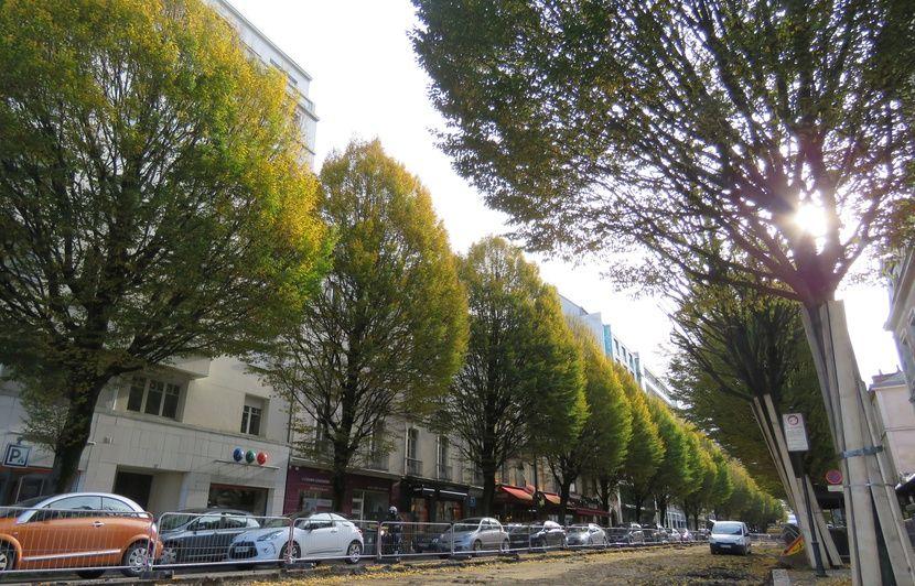 Rennes : L'abattage des arbres de l'avenue Janvier devant la justice