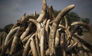 Des défenses d'éléphants au Tchad le 21 février 2014