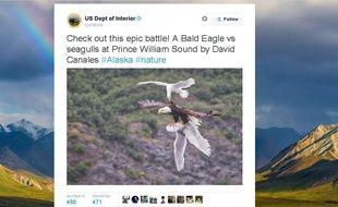 Capture d'écran du compte du ministère de l'Intérieur américain, montrant une mouette attaquant un aigle, le 14 juillet 2015.
