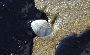 Les écosystèmes océaniques altérés par le rapide changement climatique pourraient avoir besoin de plusieurs milliers d'années pour se remettre du réchauffement