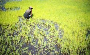 La FAO et les autorités malgaches vont lancer cette semaine une campagne de lutte contre une invasion de criquets migrateurs qui menacent gravement la récolte de riz à Madagascar.