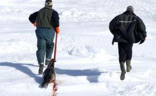 Un chasseur traîne sa proie, un jeune phoque, le 28 mars 2008, jour d'ouverture de la chasse dans le golfe du Saint-Laurent, au Canada. Le gouvernement autorise la prise de 275.000 phoques du Groenland sur les glaces à l'est des côtes canadiennes mais la saison démarre lentement, en raison notamment de l'épaisseur de la neige. Seules trois bêtes ont été tuées le premier jour.
