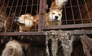 Des chiens en cage dans une ferme, illustration