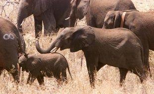 Des éléphants au Mozambique en 2001