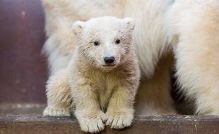 Fritz, le petit ourson polaire du zoo de Tierpark, à Berlin (Allemagne), est décédé le 6 mars 2017 des suites d'une hépatite.
